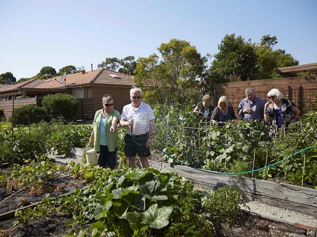 Aveo Botanic Gardens community garden