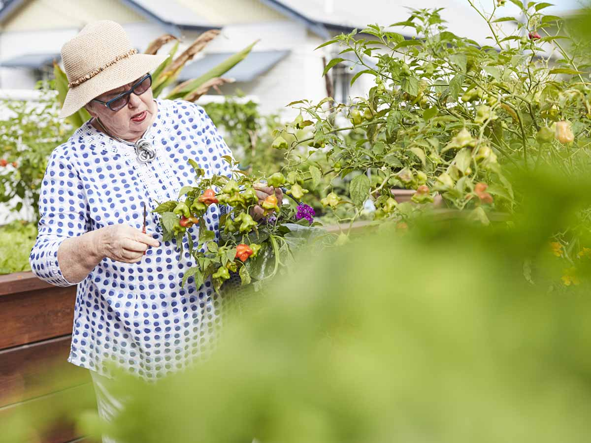 Enjoy fresh herbs and vegetables from the community garden