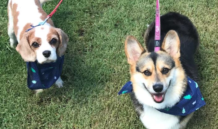 Aveo Durack Aged Care welcome companion dogs Polly and Ebby!