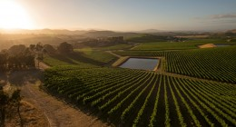 A viticultural voyage